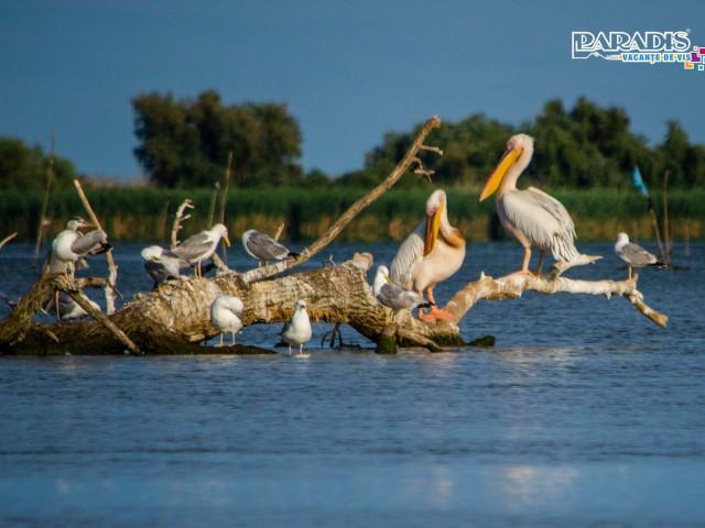 Croaziera Delta Dunarii